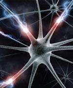 увеличенная фотография нейрона